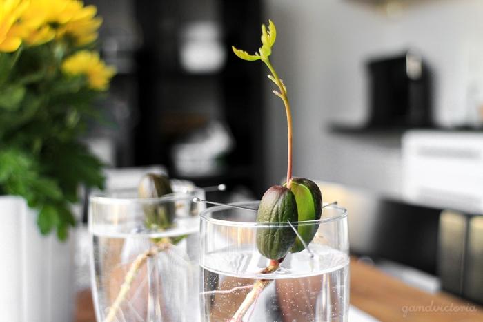 Acorn in vase. | qandvictoria.wordpress.com